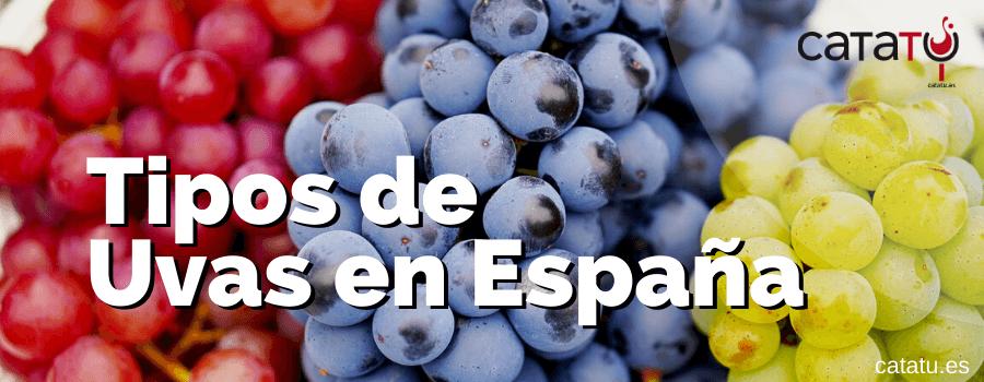Los Tipos De Uvas Para Vino Mas Utilizados En Espana