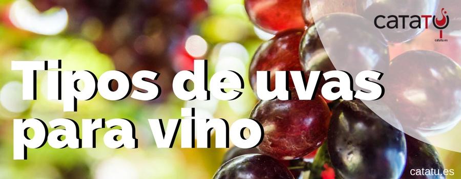Tipos De Uvas Para Vinos
