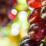 Los tipos de uvas para vino más utilizadas en España