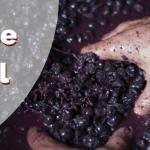 Cómo se hace el vino. Proceso de elaboración del vino