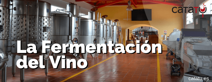 La Fermentacion Del Vino