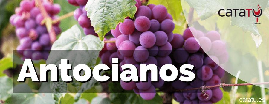 Antocianos Vino