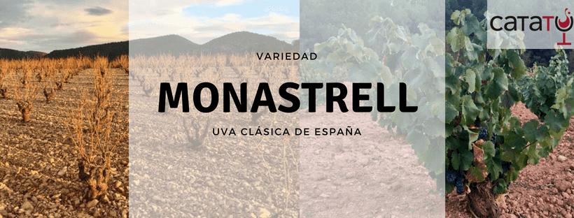 La Uva Monastrell Un Clásico Del Vino Español