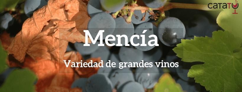 Variedad Mencía. Características y tipos de vino.