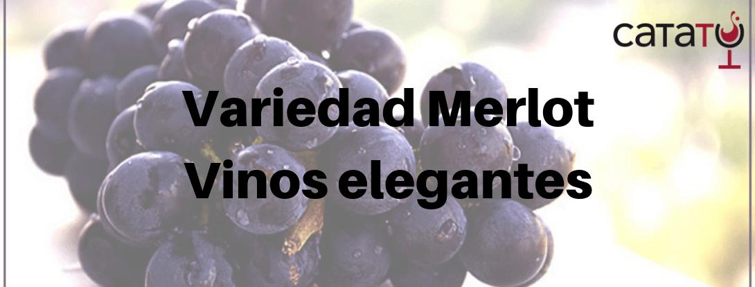 Merlot, La Variedad De Los Vinos Más Elegantes. Conoce Los Mejores Vinos.