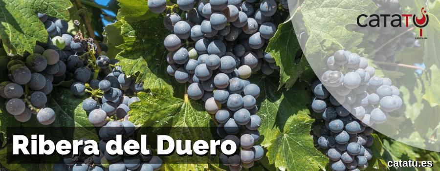 Las Variedades De Uvas Permitidas En La Ribera De Duero