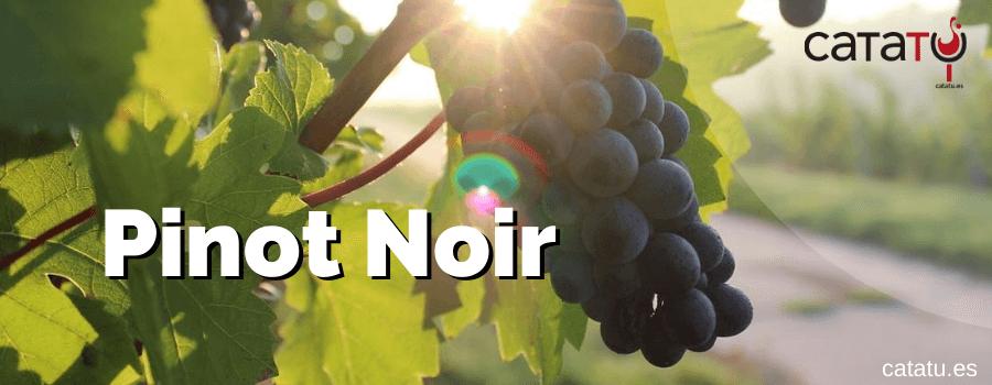 Pinot Noir, La Elegancia Y Finura Que Vino De La Borgoña.