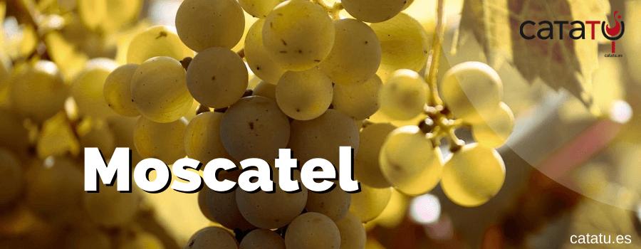 Moscatel Vinos Delicados Y Aromaticos