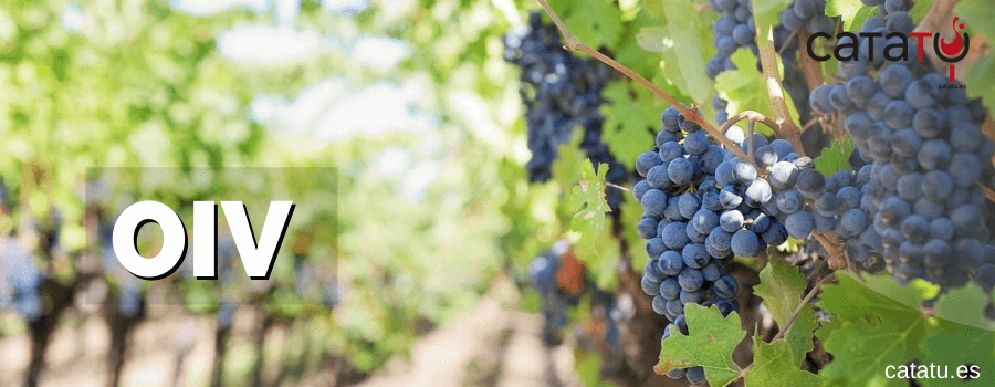 Organización Internacional De La Viña Y El Vino: OIV