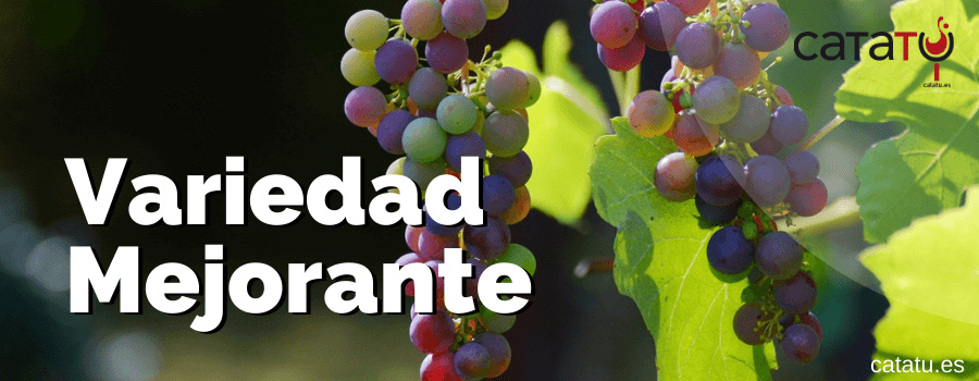 variedad uva mejorante
