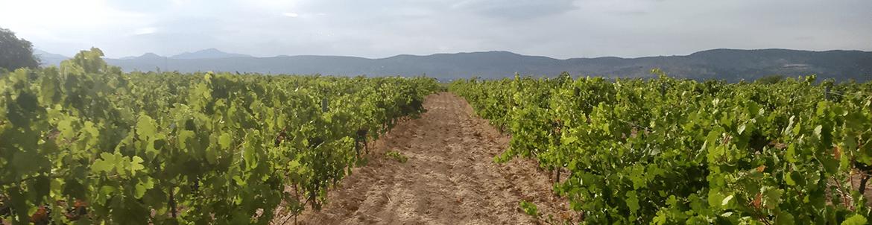 Vinos Juliana De La Rosa Compra Sus Vinos Online Directos Desde La Bodega Al Mejor Precio En Catatu